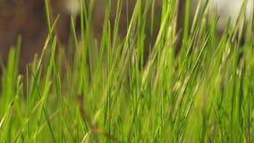 Ambiti di provenienza dell'erba di estate del bokeh della sfuocatura stock footage