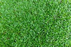 Ambiti di provenienza dell'erba verde Fotografia Stock Libera da Diritti