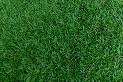 Ambiti di provenienza dell'erba verde Immagini Stock Libere da Diritti