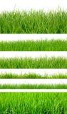 Ambiti di provenienza dell'erba verde della molla fresca Fotografia Stock