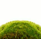 Ambiti di provenienza dell'erba verde della sorgente fresca Immagini Stock Libere da Diritti