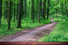 Ambiti di provenienza della foresta Immagini Stock