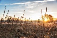Ambiti di provenienza della natura, Winterlandscape con il seedpo dell'enagra Fotografia Stock