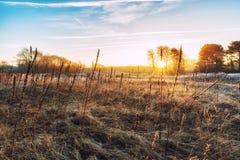 Ambiti di provenienza della natura, Winterlandscape con il seedpo dell'enagra Fotografie Stock Libere da Diritti