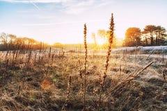 Ambiti di provenienza della natura, Winterlandscape con il seedpo dell'enagra Immagini Stock Libere da Diritti