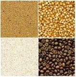 Ambiti di provenienza della senape, del caffè, del riso e del cereale Fotografia Stock Libera da Diritti