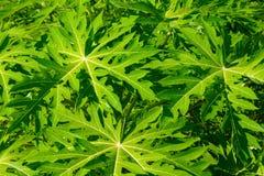 Ambiti di provenienza delle foglie verdi Fotografia Stock Libera da Diritti