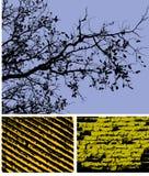 Ambiti di provenienza di alto contrasto Fotografia Stock Libera da Diritti