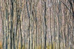 Ambiti di provenienza di legno di luce solare di struttura Foresta verde della sorgente Immagini Stock Libere da Diritti