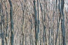 Ambiti di provenienza di legno di luce solare di struttura Foresta verde della sorgente Fotografie Stock