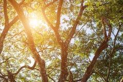 Ambiti di provenienza di legno di luce solare di verde della natura degli alberi forestali Fotografia Stock