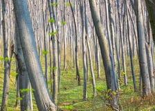 Ambiti di provenienza di legno verdi di luce solare della natura Foresta verde della sorgente Fotografia Stock