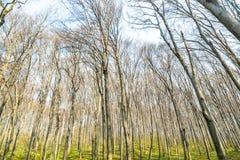 Ambiti di provenienza di legno verdi di luce solare della natura Foresta verde della sorgente Immagini Stock Libere da Diritti