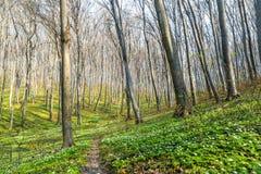 Ambiti di provenienza di legno verdi di luce solare della natura Foresta verde della sorgente Fotografie Stock