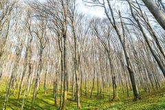 Ambiti di provenienza di legno verdi di luce solare della natura Foresta verde della sorgente Immagini Stock