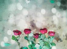 Ambiti di provenienza di Rosa Fotografie Stock