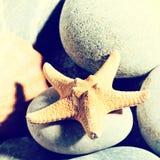 Ambiti di provenienza divertenti di concetto di vacanza Fotografia Stock