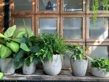 Ambiti di provenienza domestici delle decorazioni delle piante in vaso verdi fotografia stock
