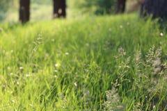 ambiti di provenienza di estate con erba verde Fotografie Stock Libere da Diritti