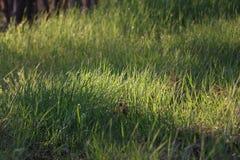 ambiti di provenienza di estate con erba verde Fotografia Stock