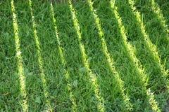 ambiti di provenienza di estate con erba verde Immagine Stock Libera da Diritti