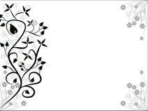 Ambiti di provenienza floreali in bianco e nero Fotografie Stock