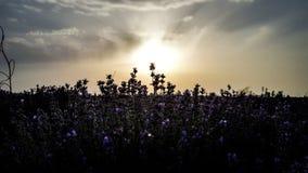 Ambiti di provenienza: indicatore luminoso del sole Fotografia Stock Libera da Diritti