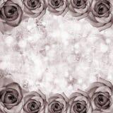 Ambiti di provenienza romantici delle rose Fotografie Stock Libere da Diritti