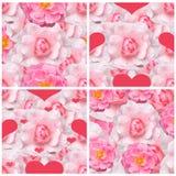 Ambiti di provenienza senza cuciture con le rose rosa Immagine Stock Libera da Diritti