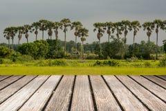 Ambiti di provenienza strutturati di legno sugli ambiti di provenienza del cielo Fotografie Stock