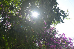 Ambiti di provenienza 035 - The Sun guarda con l'alta immagine superiore delle azione dell'albero Immagini Stock