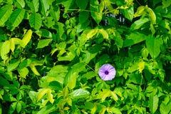 Ambiti di provenienza tropicali delle foglie verdi Immagini Stock