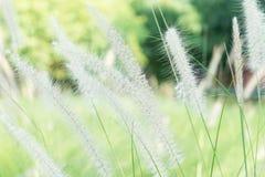 Ambiti di provenienza di verde del bokeh della sfuocatura del fiore dell'erba d'annata Immagine Stock