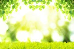 Ambiti di provenienza verdi Foglie di Bonhi Immagini Stock Libere da Diritti
