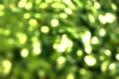 Ambiti di provenienza verdi vaghi della natura, ambiti di provenienza vaghi Fotografia Stock Libera da Diritti