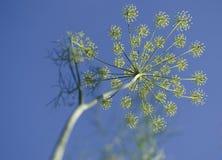 Ambitionväxter i himlen Arkivfoto