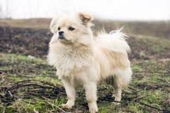 Ambizione del cucciolo immagine stock libera da diritti