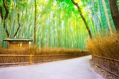 Amboobosjes in Arashiyama in Kyoto, Japan stock foto
