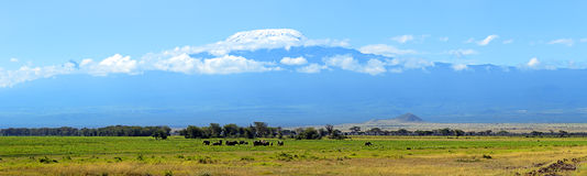Amboseli大象 库存图片