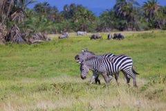 Amboseli сафари Стоковые Изображения RF