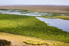Amboseli湖 库存照片