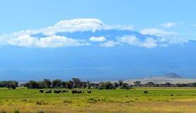Amboseli-Elefanten lizenzfreies stockbild
