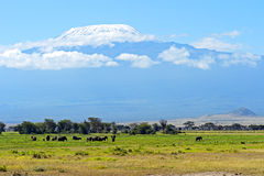 Amboseli elephants Royalty Free Stock Photo