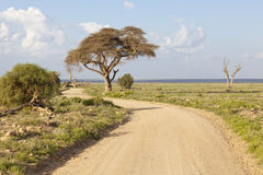 Amboseli National Park, Kenya Stock Photo