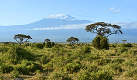 Amboseli National Park. And Mount Kilimanjaro in Kenya Stock Photo
