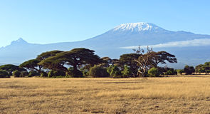 Amboseli National Park Royalty Free Stock Photography