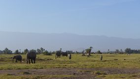 Amboseli national park, next to MT. Kilimanjaro. Get a great view of Mt. Kilimanjaro, and variety of wild animals.Elephants, wildebeest, etc Royalty Free Stock Image