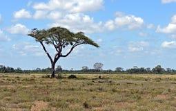 Amboseli National Park Stock Image