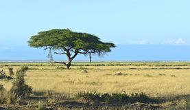 Amboseli National Park Stock Photos