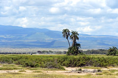 Amboseli National Park Stock Photo